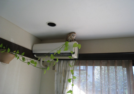 エアコンの上にも場所がある