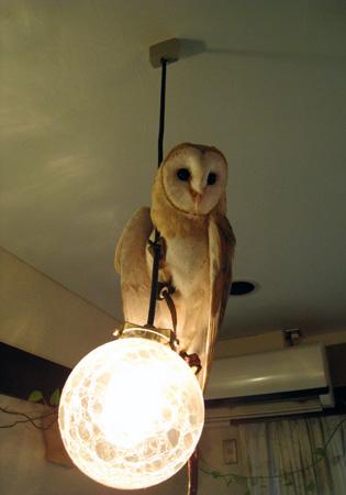 フクロウ照明