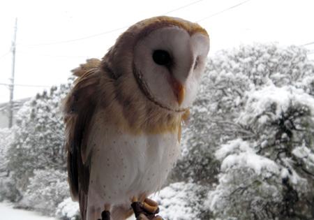 フクロウと雪景色