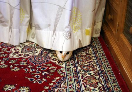 カーテンの下から