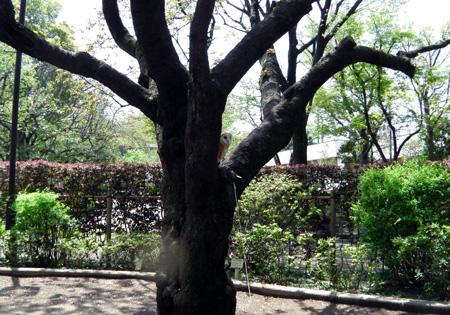 公園の木の上で