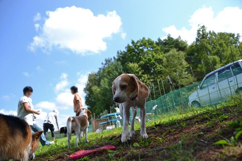 2011_0821nwan 037-80