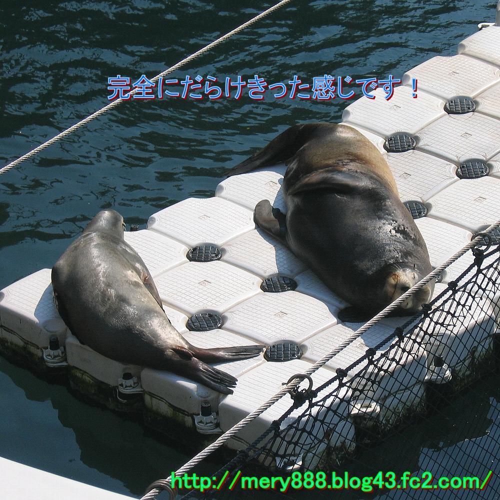 三津シーパラダイス0002