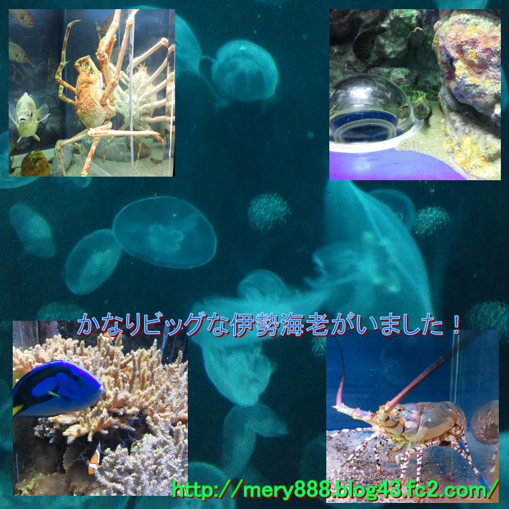 三津シーパラダイス0003