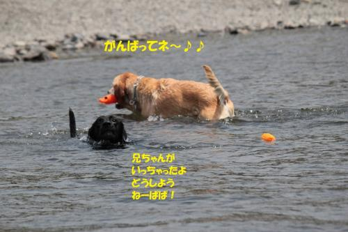 IMG_6374_20130608183320.jpg