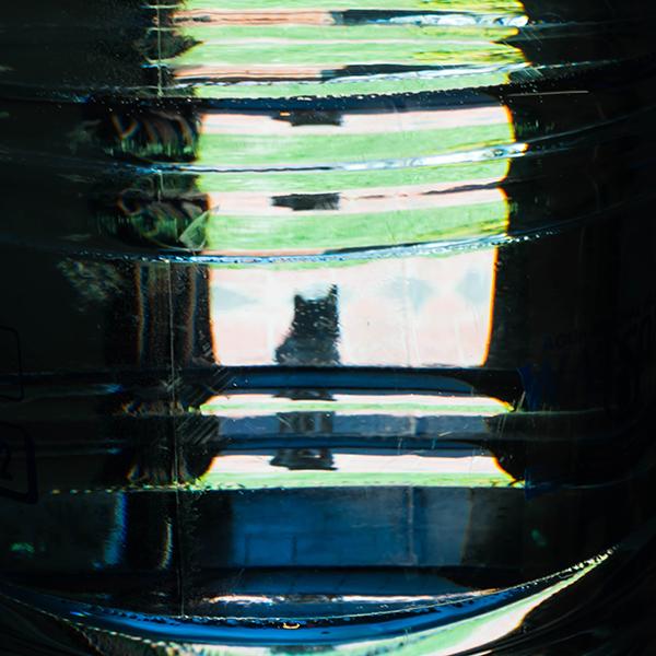 猫ボトルシルエット