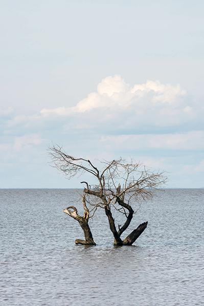 パラナ川の樹