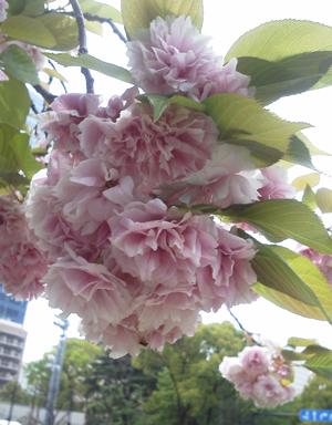 2012_04_28_01.jpg