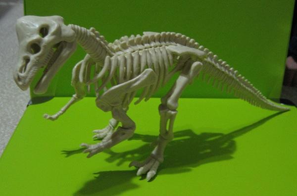 kyoryu_pachycephalosaurus.jpg