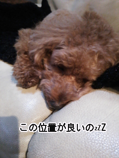 cyuusha5.jpg