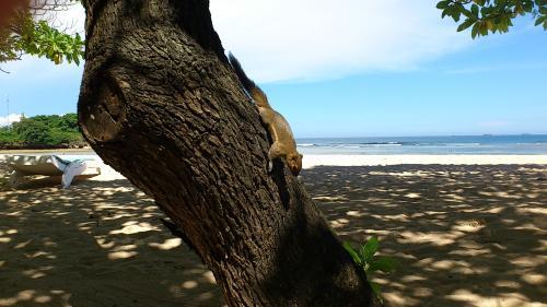 リスビーチ