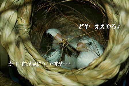 DSC_6102.jpg