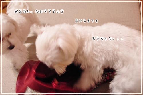 DSC_0473_20111004071631.jpg