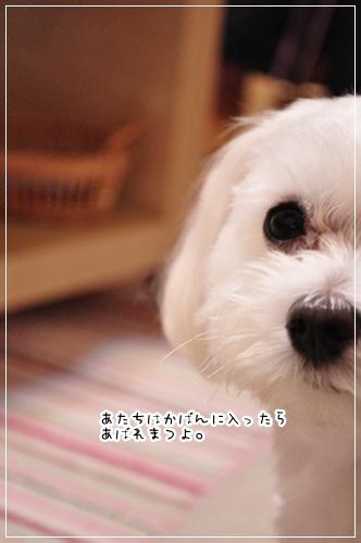 DSC_0483_20111004071750.jpg