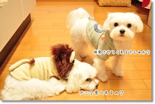 DSC_0713_20111022183750.jpg