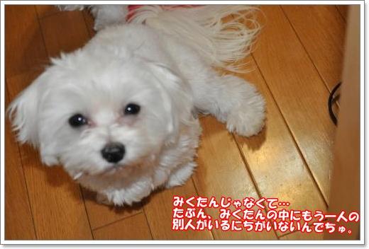 DSC_0717_convert_20110126220946_20111107190356.jpg