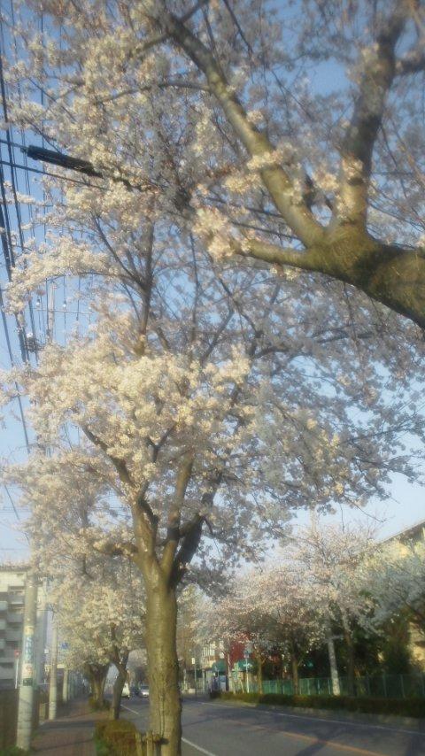 2012.桜