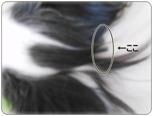 DSCN0216_convert_20120412120301_20120412160900.jpg