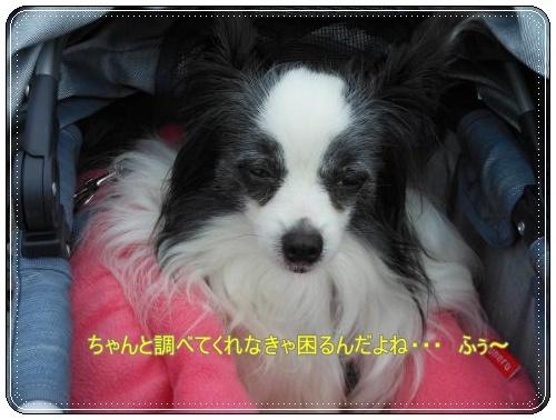 DSCN0435_convert_20120430155708.jpg
