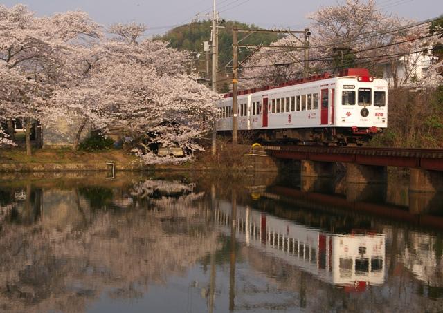 120410-wakayamatetsudou-ooikeyuuenn-ichigo-2-N.jpg
