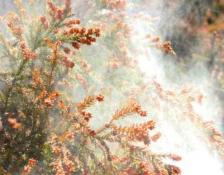 白くモヤモヤとしているのが、花粉です。