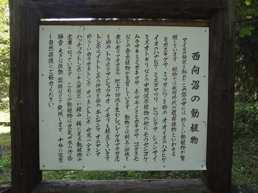 20140927-03.jpg