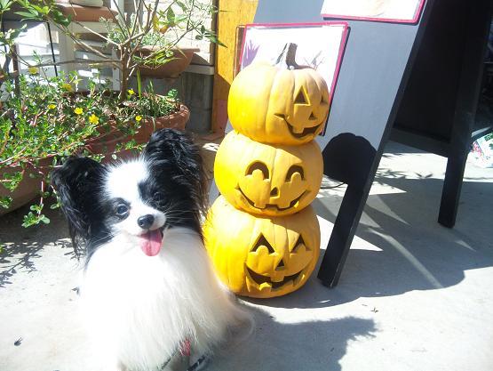 かぼちゃとランディ