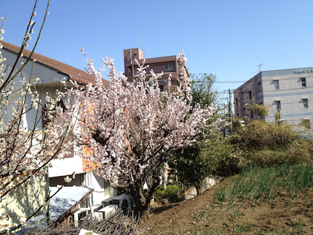 20120329-7.png