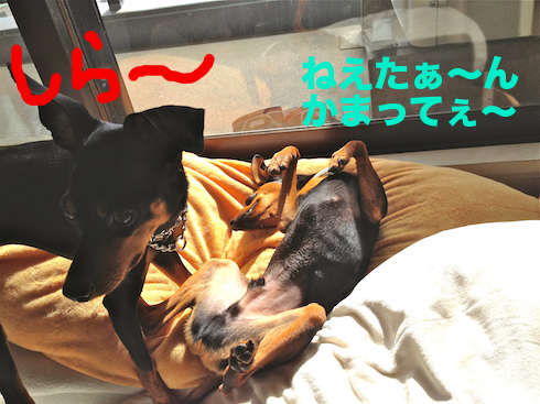 20120413.png