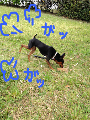 20120501-2.png