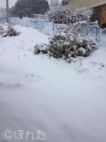 2014雪_2