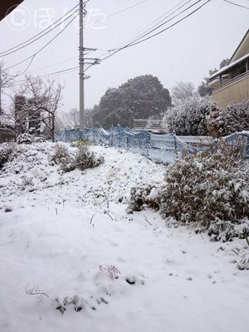 2014雪_1
