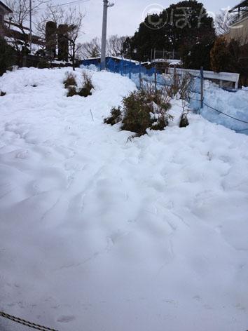 2014雪_7
