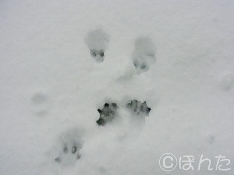 2014雪_10