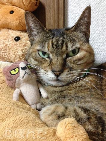 猫の日_1