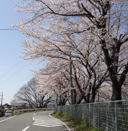 sakura2012-6_convert_20120412154805.jpg