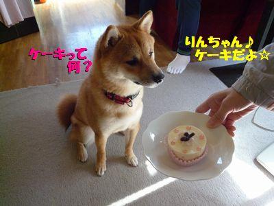 ケーキって何?