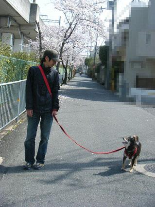 20110410ミツルリ花見