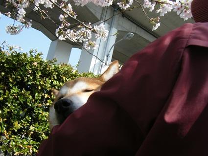 20110410ミツルリ花見3