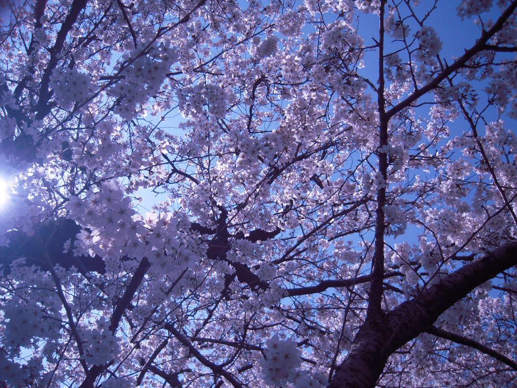 お花見☆ 2