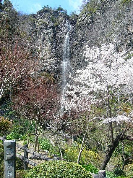 桜と不動の滝