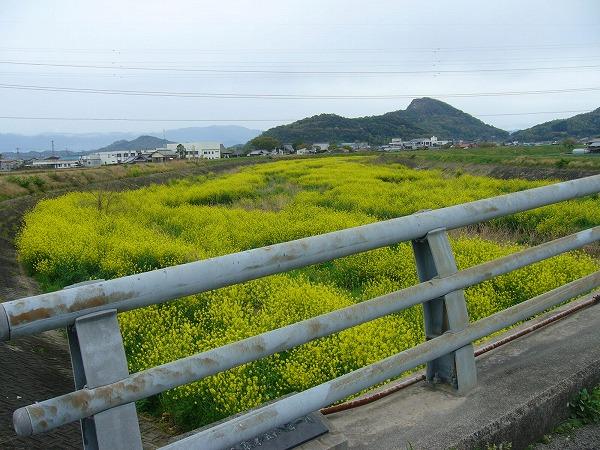 三野津橋から南