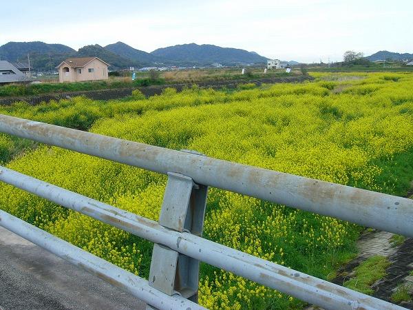 三野津橋から北