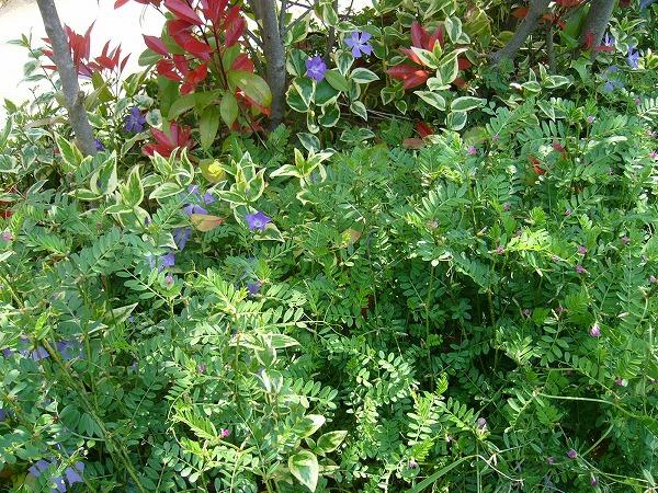 草と共に頑張っている青い花