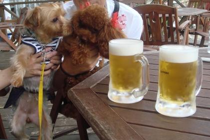 ビールとここあ