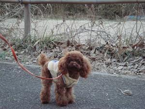 お散歩@舞岡公園
