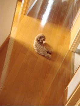 廊下で涼むここあ