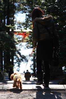ここあ@箱根神社