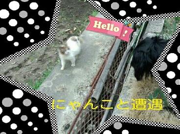 20133-23 cat