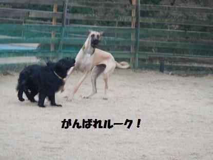 2013310ru-den2.jpg